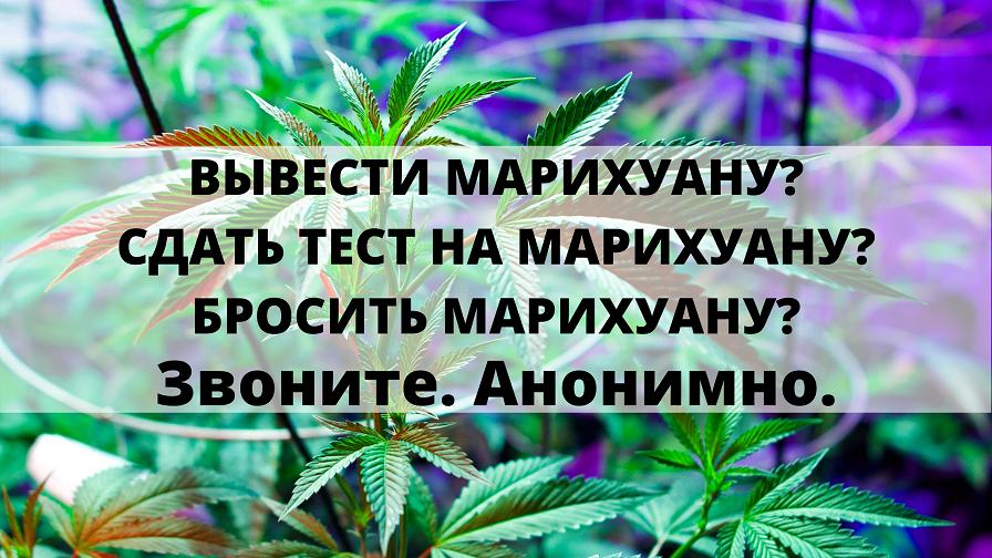 От чего зависит сила марихуаны масло с марихуаны